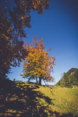(c) Wolfgang Pfleger-8502 (wolfgangp_vienna) Tags: niederösterreich loweraustria austria österreich schneeberg schneebergland herbst autumn colorful bunt wald wiese blue blau blauerhimmel