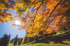 (c) Wolfgang Pfleger-8498 (wolfgangp_vienna) Tags: niederösterreich loweraustria austria österreich schneeberg schneebergland herbst autumn colorful bunt wald wiese blue blau blauerhimmel