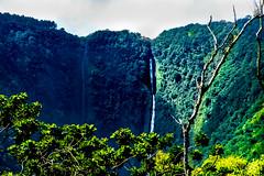 Hawaii-WaipioValley-28.jpg (Chris Finch Photography) Tags: jungle hawaiiphotography waipio taro water waipiovalley hawaii landscapephotographs cascades waterfalls landscapephotography cascade waterfall photographs chrisfinch wwwchrisfinchphotographycom chrisfinchphotography utahphotographer tarofarms bigisland tarofarm tropical valley