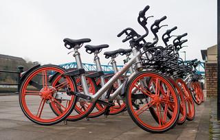 Hire a bike. . .