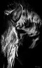 Wild (Bruno Frerejean) Tags: blackwhite blancoynegro bw mallorca portrait retrato horse caballo chevalespagnol stallion spanishstallionportrait étalon caballoentero semental