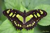 Green (Rene Mensen) Tags: butterfly burgers zoo arnhem insect green rene mensen nikon d5100