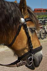 IMG_6579 (Lightcatcher66) Tags: pferdehorses florafauna makros lightcatcher66