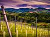 Styrian Tuscany (wketsch) Tags: wein gamlitz landschaft sommer steiermark wine muscatel famous landmark travel tuscany leica
