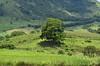 Emoldurada (Márcia Valle) Tags: zonarural minasgerais bicas nature natureza verde green montanhas mountains márciavalle nikon d5100