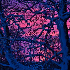Sunset (Stefano Rugolo) Tags: stefanorugolo pentax k5 pentaxk5 smcpentaxm100mmf28 sunset branches snow blue magenta sky hälsingland sverige sweden pink
