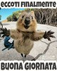 #link #divertenti #buongiorno #buona #giornata #animal #love #friends #frasi #aforisma #citazioni #Tiziana #Mosso #page #facebook https://www.facebook.com/MossoTiziana/ (tizianamosso) Tags: divertenti tiziana link citazioni frasi giornata facebook animal mosso love buona buongiorno page friends aforisma