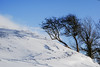 prevailing wind (lowooley.) Tags: snow northumberland northernengland