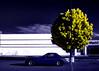 miazure (fe2cruz) Tags: ir panasonic dmcfh20 lumix dc vario 14mp infraredconversion 650nm kolarivision trees infrared cyan flora car miata roadster convertible yellow mazda tree crystal color 7dwf