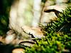 Muchroom / Paddestoelen (Roelofs fotografie) Tags: wilfred roelofs nikon d5600 2017 mushroom paddestoel nature neterlands dutch holland woods outdoor autumn flora forest bright light grass green moss