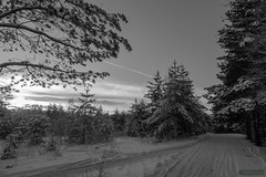 Snowmobile tracks (kentkirjonen) Tags: lumix fz300 sweden sverige dalarna wood trä sun sol solen snow snö tree trees träd solnedgång sunset winter vinter bw snowmobile snöskoterspår snöskoter airplane flygplan