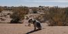 Sahara......-puuuuuhh--1 (Piefke La Belle) Tags: kef aziza morocco marokko moroc ouarzazate mhamid zagora french foreign legion fort tazzougerte