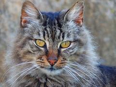 Questione di feeling... (antonè) Tags: randagio coloniafelina portoconte alghero sardegna sardinia cat chat antonè