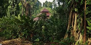 INDONESIEN, Im botanischen Garten von Bogor, 17058/9511