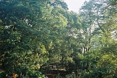 000010p (nanang resyadi) Tags: 35mm film kodak colorplus200 mjuii olympus tree leaves
