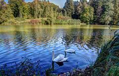 Swan lake (kud4ipad) Tags: 2015 garden landscape park hdr botanic tree water pond swan reflection shadow ukraine