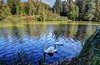 Swan lake (kud4ipad) Tags: 2015 garden landscape park hdr botanic tree water pond swan reflection shadow ukraine