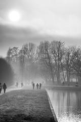 505201801aMILANO-206-Modifica (GIALLO1963) Tags: milano parconordmilano canonef70300mmf456lis nature italy lombardy canoneos5ds fog trees mist sunset