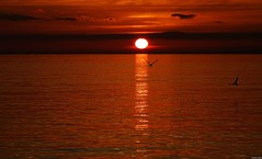 Forever chasing the sunset (KOSTAS PILOT) Tags: sunset goldenhour goldenlight seagull liquidgold sun light patrascitysunset horizon sea silhouette shadows ionion mediterranean sky clouds greece peloponese achaia patraikos sony sonyhx60 kostaspilot serenity seacape scenic orange catching chasing ελλάδα πελοπόννησοσ αχαιασ πατραικοσ ιονιον μεσόγειοσ θάλασσα ουρανόσ σύννεφα οριζοντασ γλάροσ beach coast παραλιαπατρων παραλια πορτοκαλί ήλιοσ ηλιοβασίλεμα ηλιοβασίλεμαπατρασ πατρινοηλιοβασίλεμα χρυσηωρα χρυσοφωσ