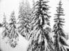 Fresh snow cover (holtelars) Tags: pentax 645 pentax645 645n 6x45 smcpentaxa 35mm f35 120 film 120film foma fomapan fomapan100 professional 100iso mediumformat analog analogue blackandwhite classicblackwhite bw monochrome filmforever ishootfilm filmphotography xtol homeprocessing larsholte snow firs alps avoriaz france trees