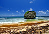 Rock at Bathsheba Beach in Barbados (` Toshio ') Tags: toshio barbados bathsheba bathshebabeach rock mushroomrock caribbean ocean caribbeansea sand waves paradise seaweed sky fujixt2 xt2 shells seashells