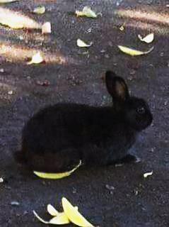 A bunny rabbit