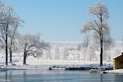 08022018-DSC_0036 (vidjanma) Tags: étang hiver neige givre oies ardenne