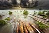 Nightcliff's Mangroves - weather watchers (Louise Denton) Tags: mangrove darwin beach coast weather wet season tropicalk ocean water shore australia nt northernterritory outback green tree