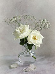 White Roses Still Life (Through Serena's Lens) Tags: gypsophila baby'sbreath flower rose white stilllife tabletop texture dof canoneos6dmarkii flora 7dwf petals