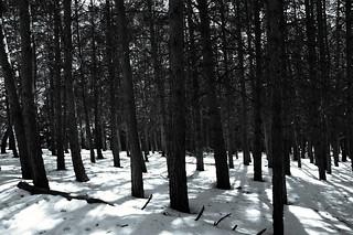 White forest...(explore)