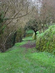 Chemin (herve.charpentier) Tags: campagne arbres chemin vert lusignan poitou charente melusine fee green road tree sony
