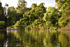 Wet season in the Peruvian Amazon (Scott Ableman) Tags: lindbladexpeditions delfinii delfinrivercruises skiff amazon pacayasamiria wetseason rainforest exploration expedition riverboat peruvianrainforest peruvianamazon delfinamazoncruises delfinamazonrivercruises