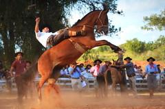 Marcelo Camejo (Eduardo Amorim) Tags: gaúcho gaúchos gaucho gauchos cavalos caballos horses chevaux cavalli pferde caballo horse cheval cavallo pferd pampa campanha fronteira quaraí riograndedosul brésil brasil sudamérica südamerika suramérica américadosul southamerica amériquedusud americameridionale américadelsur americadelsud cavalo 馬 حصان 马 лошадь ঘোড়া 말 סוס ม้า häst hest hevonen άλογο brazil eduardoamorim gineteada jineteada