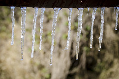 Houston Icicles (TheReilDeal) Tags: houston texas ice icicles storm winter icestorm frozen