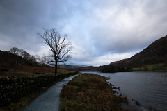 Rydal Water (lsullivanart) Tags: photography shot shooter shoot snap snapshot fuji fujifilm fujix fujinon fujixt2 xt2 fujinon1024 fujinonxf1024 fuji1024 fujifilm1024 winter snow rain autumn clouds weather moody dramatic atmospheric storm landscape hills rural fields parks streams rivers lakes gardens valleys views natural beautiful scenery scenic estate trees europe uk unitedkingdom britain england thelakedistrict windermere ambleside thelakes lakeside mountains drama cinematic grass rocks sky tree road lake water park