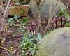 2018 Germany // Unser Garten - Our garden // im Januar (maerzbecher-Deutschland zu Fuss) Tags: garten natur deutschland germany maerzbecher garden januar unsergarten 2018