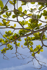 IMG_3664 (CandiceLobo) Tags: belize belizeandreams beach besttimes honeymoon travel tropical adventure happyplace beautiful ocean blue green nature getaway