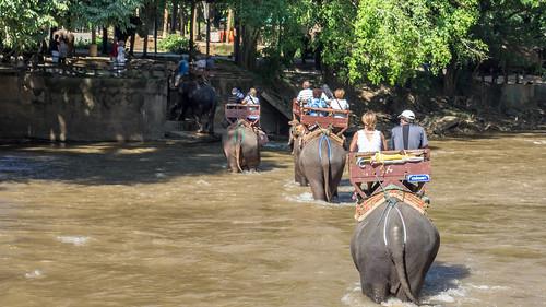 Balade d'éléphant