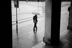 rain, rain, rain (gato-gato-gato) Tags: 35mm ch contax contaxt2 iso400 ilford ls600 noritsu noritsuls600 schweiz strasse street streetphotographer streetphotography streettogs suisse svizzera switzerland t2 zueri zuerich zurigo z¸rich analog analogphotography believeinfilm film filmisnotdead filmphotography flickr gatogatogato gatogatogatoch homedeveloped pointandshoot streetphoto streetpic tobiasgaulkech wwwgatogatogatoch zürich black white schwarz weiss bw blanco negro monochrom monochrome blanc noir strase onthestreets mensch person human pedestrian fussgänger fusgänger passant sviss zwitserland isviçre zurich autofocus