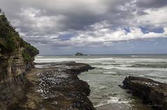 20180207-IMG_0030 (alexeyborissov) Tags: auckland aucklandnz newzealand nz muriwai bay cliff coast gull nature natgeo nordland northland