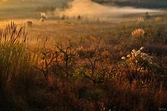 Morning shining in the mist - Manhã de brilho na bruma (Yako36) Tags: portugal óbidos nature natureza landscape paisagem manhã morning bruma mist fujifilmxt10 xf1855mmf284rlmois
