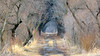 Tree Tunnel Path (AmyEHunt) Tags: tree path tunnel bark woods forest landscape nature water grass dirt