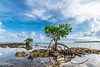 New Beginnings - Vaca Key, FL (ChuckPalmer {cepalm}) Tags: floridakeys keys mangrove travel clouds florida nature ocean sky chuckpalmer