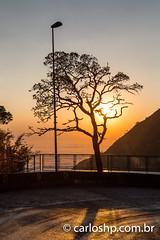 rio do rastro-10 (CARLOS_HP) Tags: amanhecer arvore estrada serradoriodorastro alvorada bomjardimdaserra cinturãodevenus contraluz iluminação mardenuvens nuvens santacatarina silhueta sobreasnuvens solnascendo