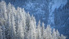 Diagonal (Bram de Jong) Tags: trees tree mountain germany nikond500 landscape blue snow forest wood tegelberg schwangau