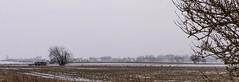 An essay on snow (Mattias Lindgren) Tags: nikond600 50mmf18 snow spring sweden white yongnuo roedeer rådjur slätt skåne