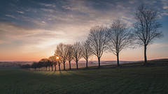 Sonnenuntergang in den Baumbergen (stevepe81) Tags: sigma16mm14 landscape landschaft sonnenuntergang germany münsterland outdoor landscapephotography bäume travel baumberge baum wiese alpha blauestunde stevertal sunset lightroom feld wolken münster sonyalpha6300 havixbeck
