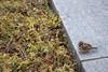 sparrow (Hideki Iba) Tags: bird park kobe japan nikon d850 日本 神戸 雀 鳥 saparrow