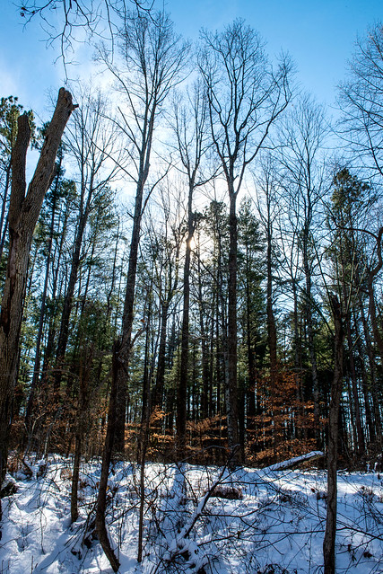 Hoosier National Forest - Kings Ridge - January 18, 2018