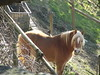 Winter stroll in Montevecchia (Londrina92) Tags: montevecchia brianza lombardia lombardy lecco cavallo animal horse
